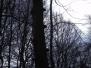 2012-02 Warndt-Wald
